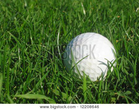 Golfball in long grass