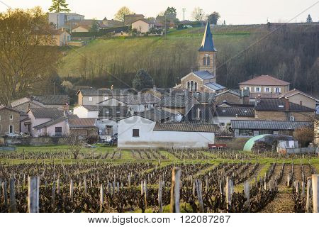 Vineyards and Village of Saint Julien in Beaujolais, France