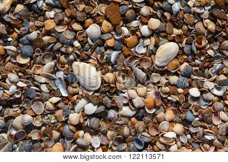 Shells and pebbles on the seashore. Backgrounds and textures