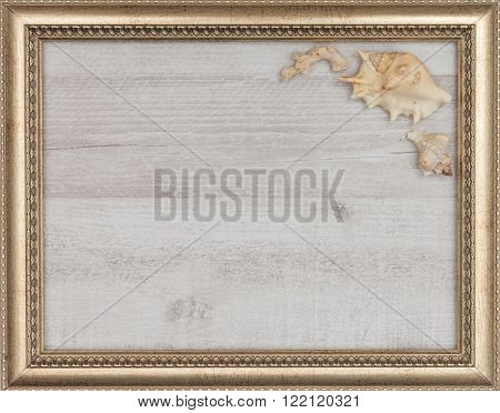 gilded picture frame with shells inside closeup