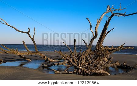 During sunset, a driftwood tree in captured on the beach.