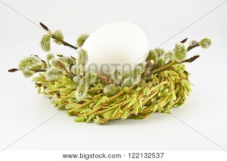 Egg in a nest made from catkins on a white background.