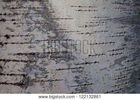 Birch bark background. Birch bark texture. Tree bark background. Bark background. Bark texture. Tree bark texture