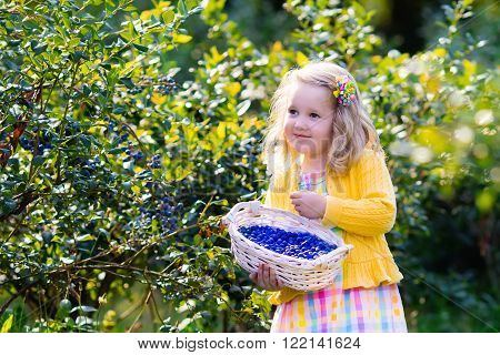 Kids picking fresh berries on blueberry field. Children pick blue berry on organic farm. Little girl playing outdoors in fruit orchard. Toddler farming. Preschooler gardening. Summer family fun.