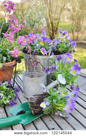 violas on planter in front of flower pots on a garden table