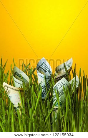 Dollars growing in green grass. Investment growth. Financial concept.