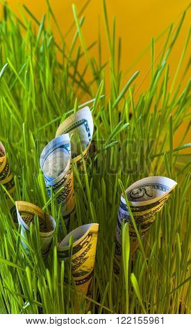 Dollar bills in green grass. Financial concept.