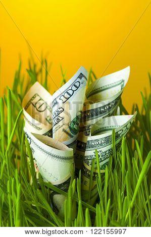 Dollar bills growing in green grass. Financial concept.