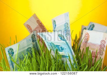 Russian ruble bills among green grass. Money growth. Financial concept.