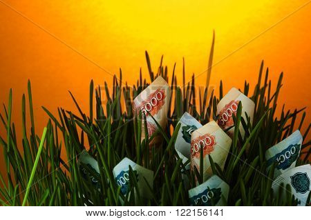 Ruble bills in green grass. Investment growth. Financial concept.