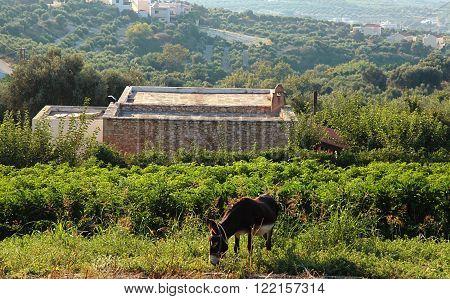 A donkey on a countryside landscape, Crete, Greece