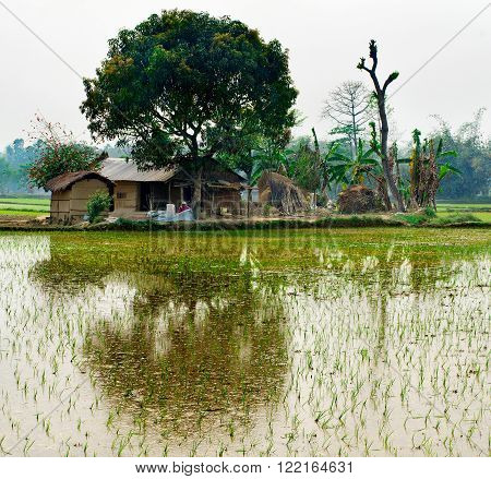 Green rice field and hut in Nepal