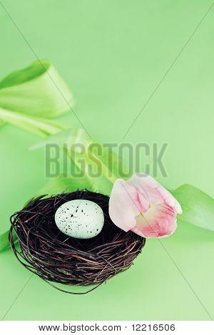 Tulip e ninho do pássaro
