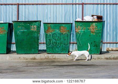 Happy dog jack russell terrier walking near the trash