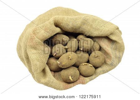 Seed potatoes for spring planting, maincrop variety 'Picasso'.