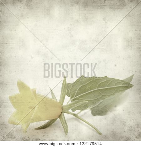 textured old paper background with Canarina canariensis, canarian bellflower