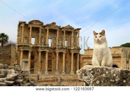 Cat At Ephesus, Turkey