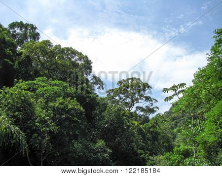 Beautiful tropical rainforest landscape in the middle of South America