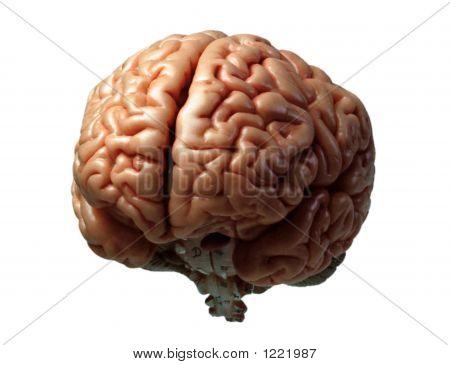 Modelo de cérebro