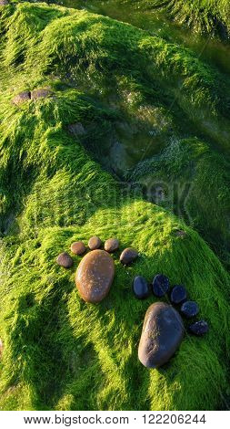Foot, Pebble, Seaweed, Art, Seaside