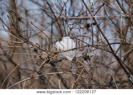 piece of snow stuck among the twigs