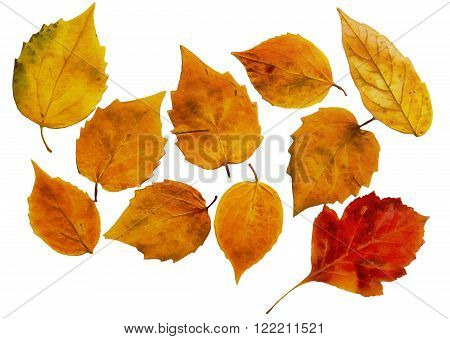 drawing of dried fall leaves of plants on a lattice of thin straws and branches isolated on white watercolor paper background for scrapbook, painted wooden planks, object, roughage autumn leaf.