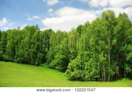 Beautiful green meadow and trees in the Czech Switzerland