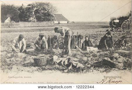 Potato Farmers In 1904