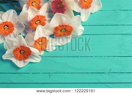 Background with bright orange daffodils flowers on turquoise painted wooden planks. Selective focus. Place for text. Toned image.