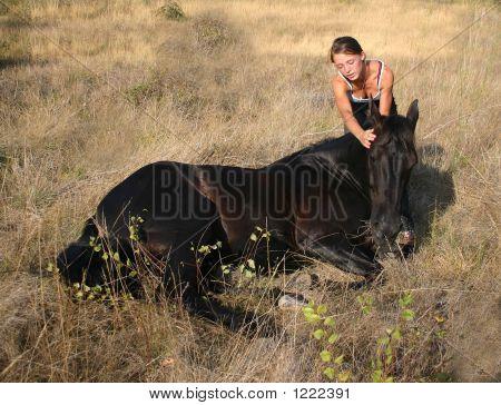 Stallion Laid Down