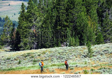 Two park rangers work in a field. One is spraying and the other guiding and protecting. Both are in the wilderness of Yellowstone National Park in Montana.
