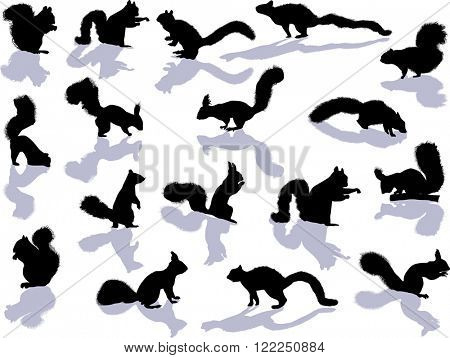 illustration with seventeen squirrels isolated on white background