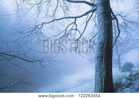 tree in deep winter fog Baden-Wurttemberg Germany