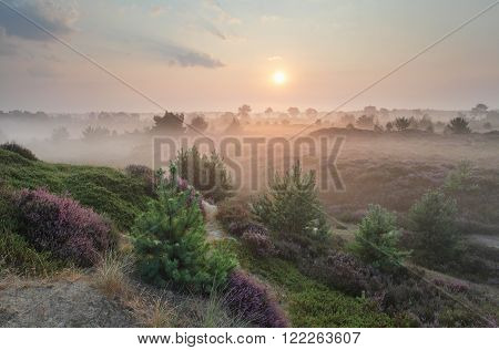 beautiful foggy sunrise over hills with heather and pines in summer