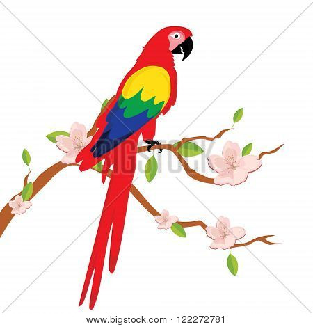 Vector illustration colorful macaw parrot sitting on blooming tree branch. Beautiful macaw. Cartoon red parrot