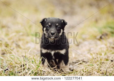 Cute little sad black stray puppy sitting on the grass in field