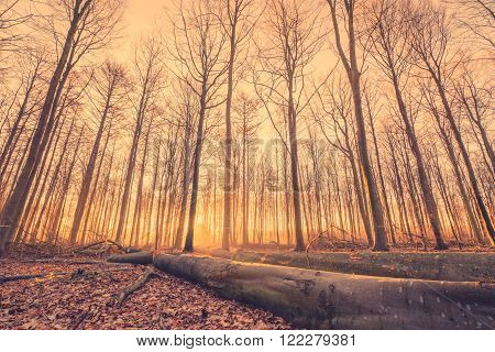 Lumber In A Forest At Sunrise