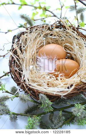 easter eggs in a nest with feather