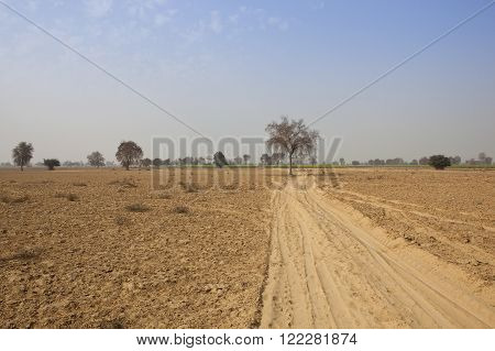 a dusty abohar landscape with trees and crops in rajasthan india under a blue sky in springtime