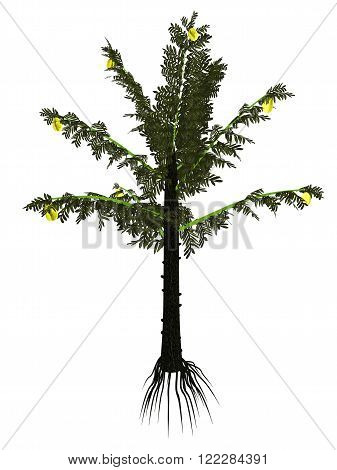 Alethopteris serli prehistoric tree isolated in white background - 3D render