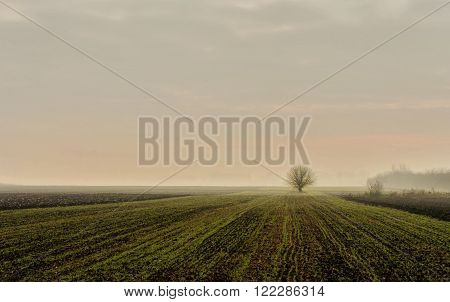 lonely tree on a field   alone fog, green