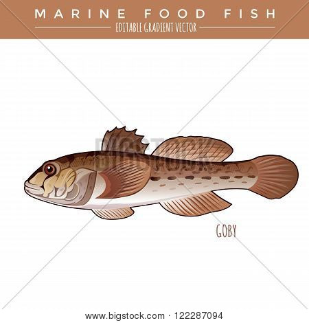 Goby illustration. Marine food fish, editable gradient vector
