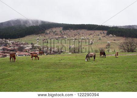 Horses grazing in the roadside pasture. View of folk museum Zheravna village in Bulgaria. Mountain village.