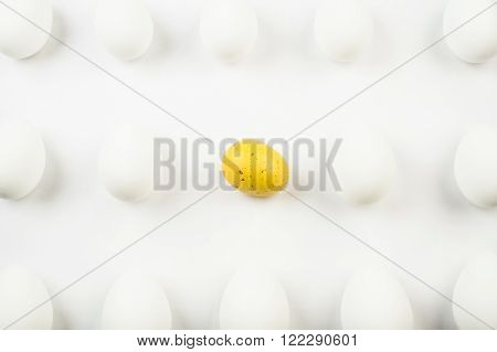 One spotted yellow egg among rows of bleached white eggs.