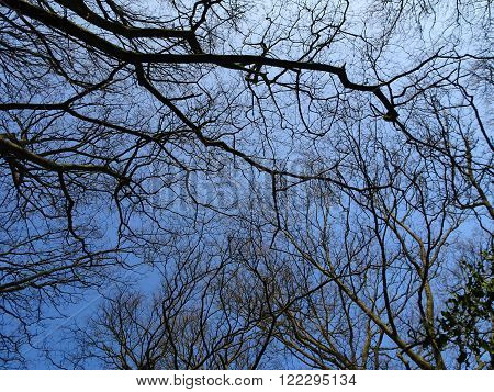 Tree branches photographed at Knightshayes Court in Bolham in Devon