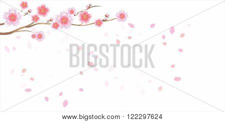 Branch of sakura with flowers. Cherry blossom branch with petals falling isolated on white. Vector