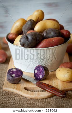 Various varieties of new,red and purple potatoes