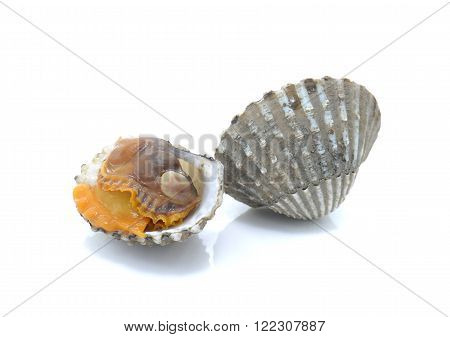 Cockle , Scallop isolated on a white background.