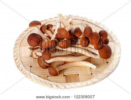 Japanese mushroom on Bamboo flooring placed on white background.