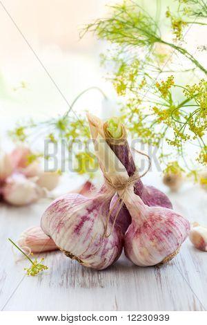 cloves and bulbs of fresh garlic